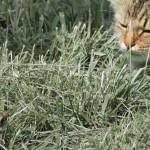 Un chat tente d'attraper un oiseau